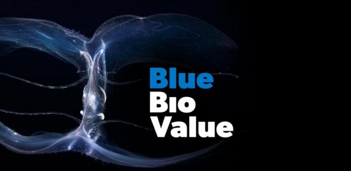blue bioeconomy